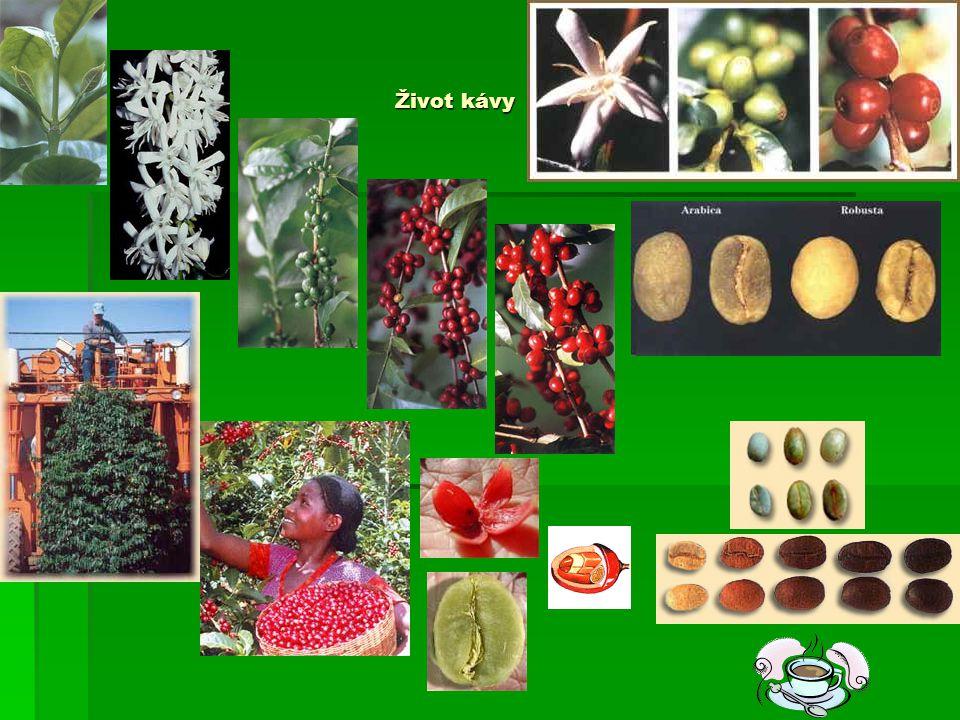 1.Ve které zemi se nachází největší oblast, ve které se pěstuje káva.
