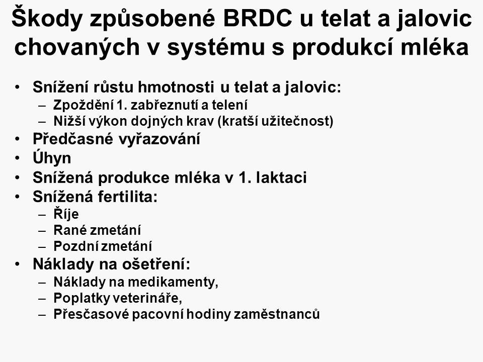 Škody způsobené BRDC u telat a jalovic chovaných v systému s produkcí mléka •Snížení růstu hmotnosti u telat a jalovic: –Zpoždění 1. zabřeznutí a tele