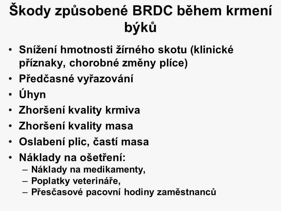 Škody způsobené BRDC během krmení býků •Snížení hmotnosti žírného skotu (klinické příznaky, chorobné změny plíce) •Předčasné vyřazování •Úhyn •Zhoršen
