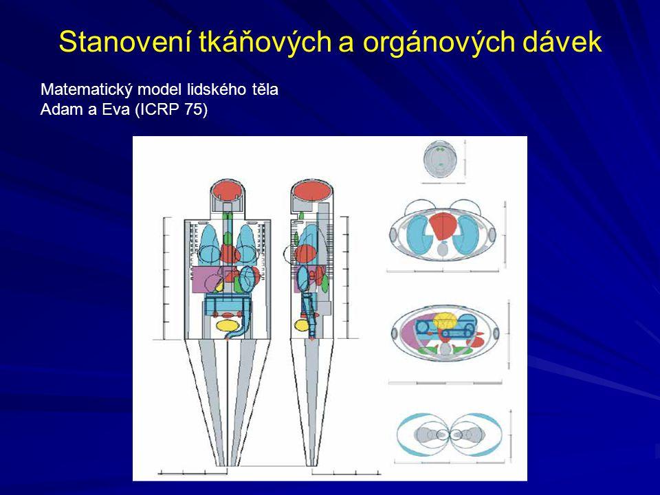 Stanovení tkáňových a orgánových dávek Matematický model lidského těla Adam a Eva (ICRP 75)