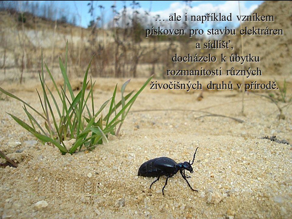 … ale i například vznikem pískoven pro stavbu elektráren a sídlišť, docházelo k úbytku rozmanitosti různých živočišných druhů v přírodě. docházelo k ú
