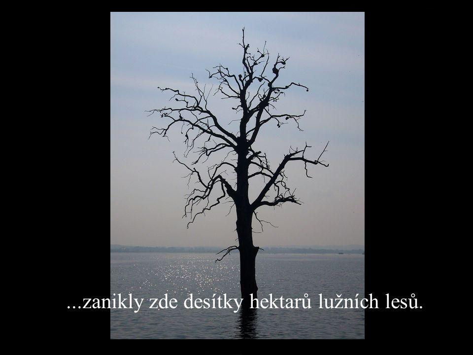 ...zanikly zde desítky hektarů lužních lesů.
