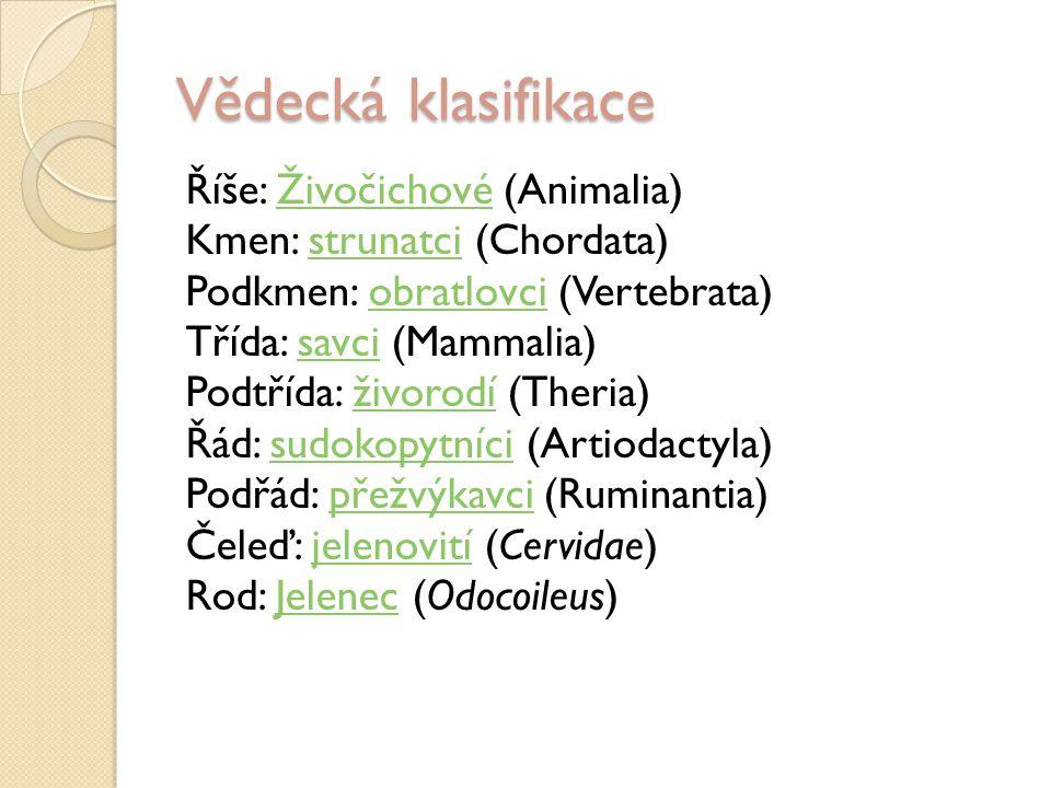 Vědecká klasifikace Říše: Živočichové (Animalia)Živočichové Kmen: strunatci (Chordata)strunatci Podkmen: obratlovci (Vertebrata)obratlovci Třída: savci (Mammalia)savci Podtřída: živorodí (Theria)živorodí Řád: sudokopytníci (Artiodactyla)sudokopytníci Podřád: přežvýkavci (Ruminantia)přežvýkavci Čeleď: jelenovití (Cervidae)jelenovití Rod: Jelenec (Odocoileus)Jelenec