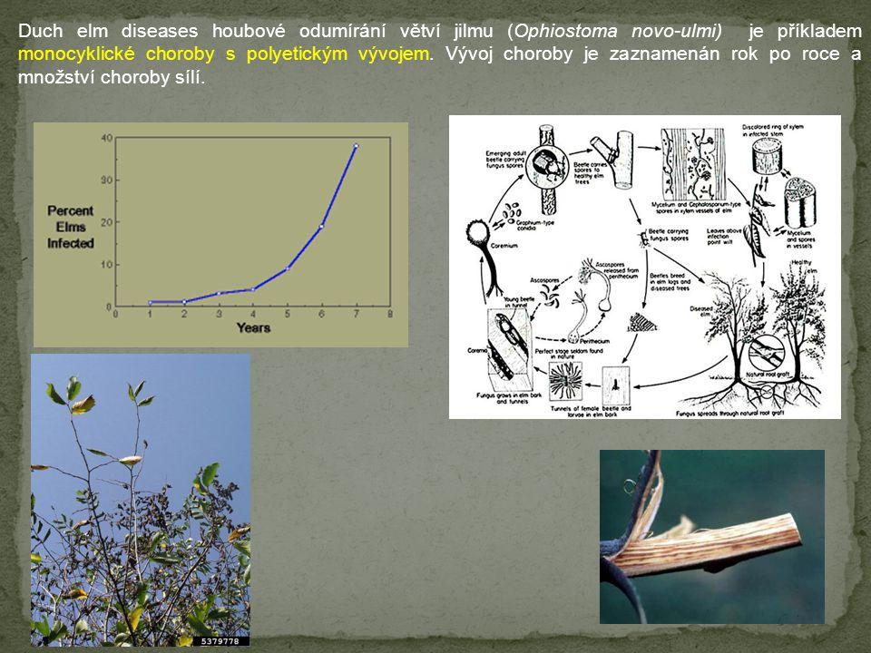 Duch elm diseases houbové odumírání větví jilmu (Ophiostoma novo-ulmi) je příkladem monocyklické choroby s polyetickým vývojem. Vývoj choroby je zazna