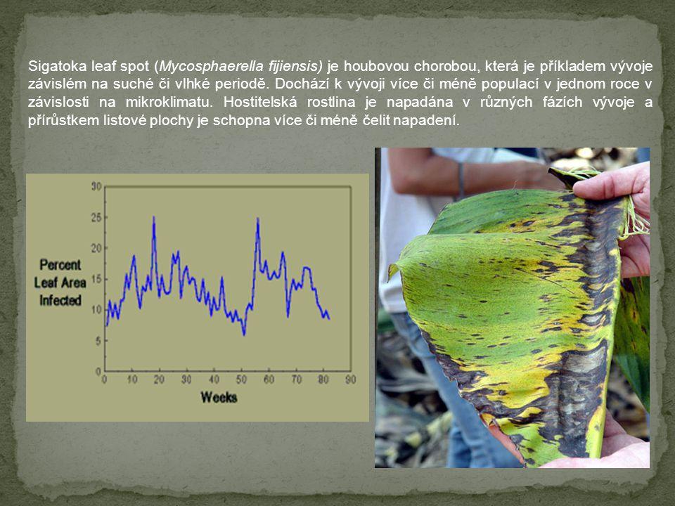 Sigatoka leaf spot (Mycosphaerella fijiensis) je houbovou chorobou, která je příkladem vývoje závislém na suché či vlhké periodě. Dochází k vývoji víc