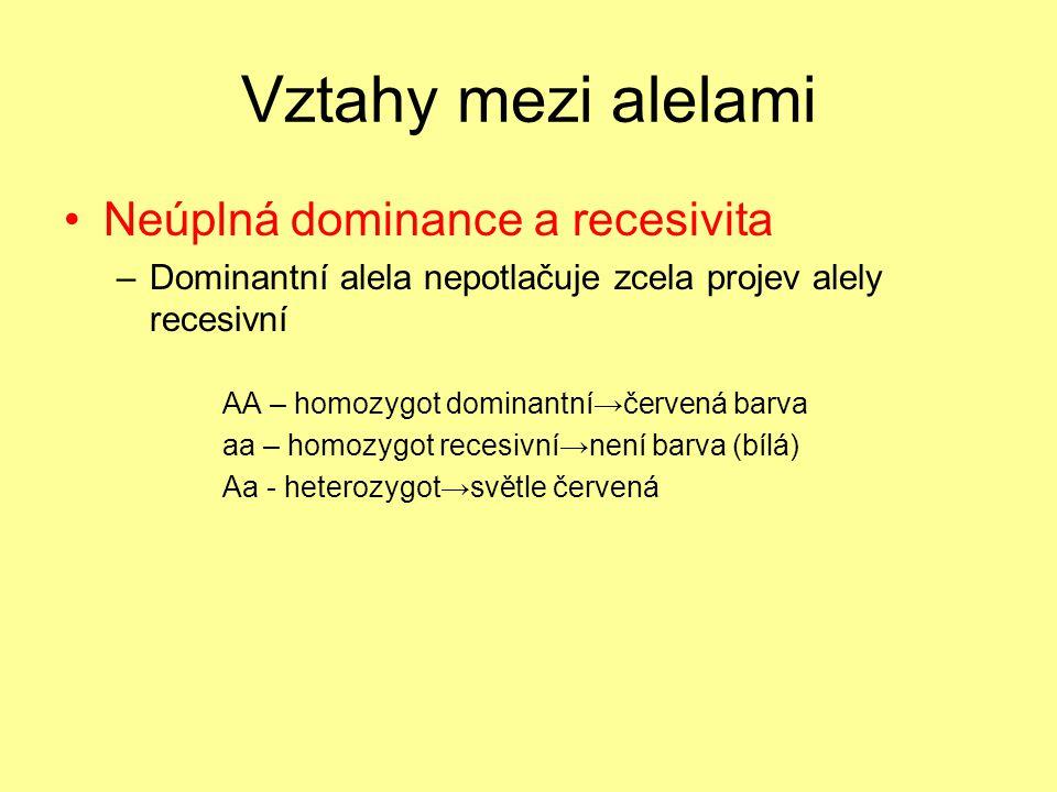 Vztahy mezi alelami •Neúplná dominance a recesivita –Dominantní alela nepotlačuje zcela projev alely recesivní AA – homozygot dominantní→červená barva aa – homozygot recesivní→není barva (bílá) Aa - heterozygot→světle červená