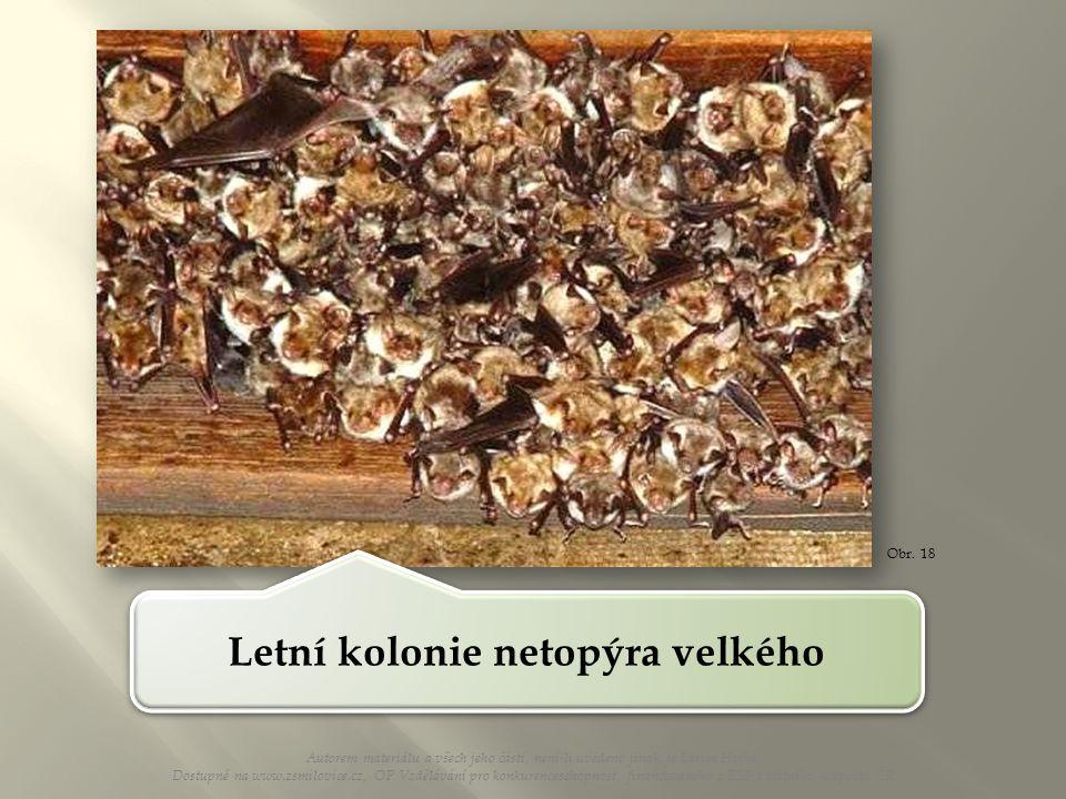 Obr. 18 Letní kolonie netopýra velkého Autorem materiálu a všech jeho částí, není-li uvedeno jinak, je Larisa Horká. Dostupné na www.zsmilovice.cz, OP