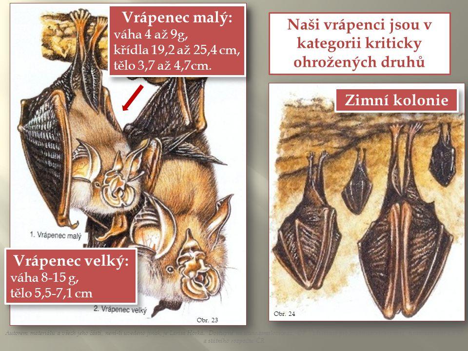 Autorem materiálu a všech jeho částí, není-li uvedeno jinak, je Larisa Horká.