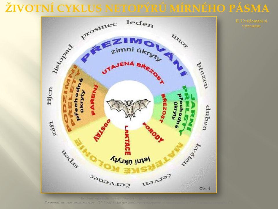 Schematický p ř ehled druh ů netopýr ů v Č eské republice Autorem materiálu a všech jeho částí, není-li uvedeno jinak, je Larisa Horká.