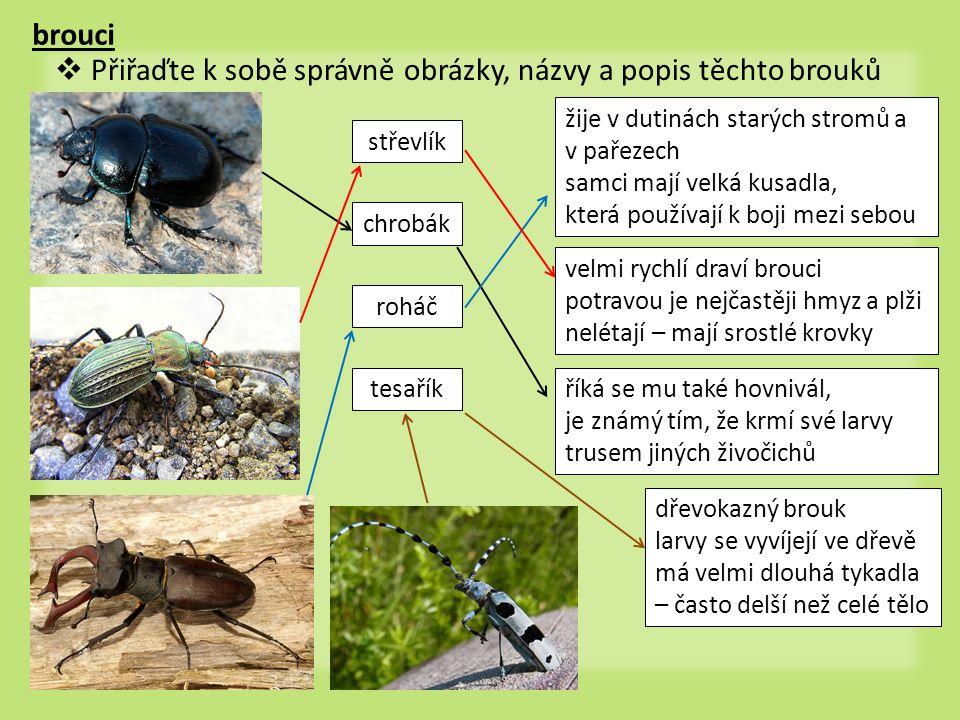 brouci  Přiřaďte k sobě správně obrázky, názvy a popis těchto brouků chrobák roháč střevlík tesaříkříká se mu také hovnivál, je známý tím, že krmí sv