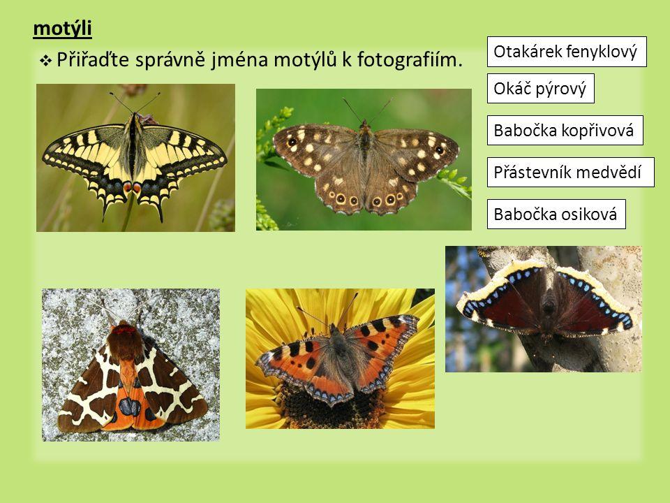 motýli  Přiřaďte správně jména motýlů k fotografiím. Otakárek fenyklový Okáč pýrový Přástevník medvědí Babočka kopřivová Babočka osiková