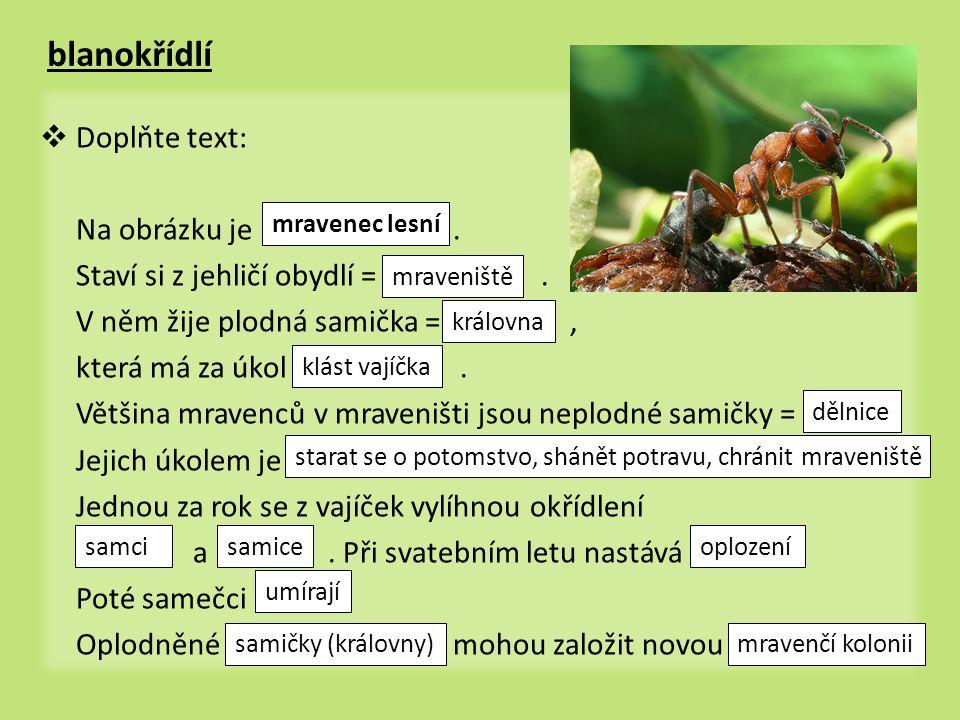 mravenec lesní • je všežravec • živí se živým i mrtvým hmyzem a jinými malými živočichy, šťávou plodů, semeny a také výměšky ze žláz mšic = mravenci a mšice žijí spolu v • je velmi užitečný - hubí velké množství lesních škůdců symbióze medovice okřídlený samec mravence mraveniště