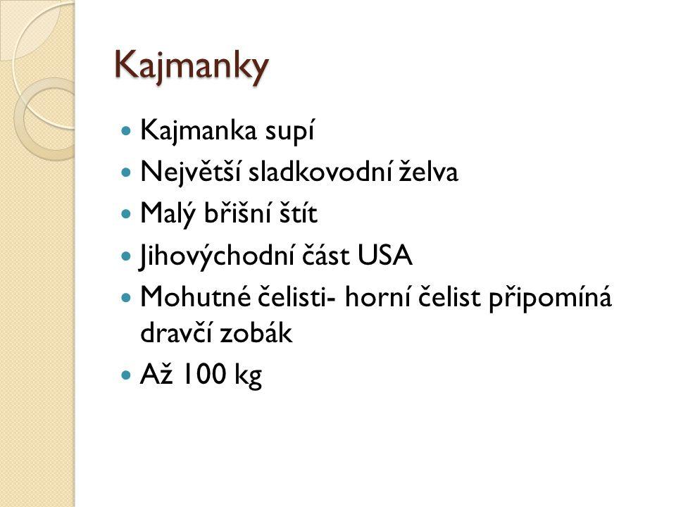 Kajmanky  Kajmanka supí  Největší sladkovodní želva  Malý břišní štít  Jihovýchodní část USA  Mohutné čelisti- horní čelist připomíná dravčí zobá