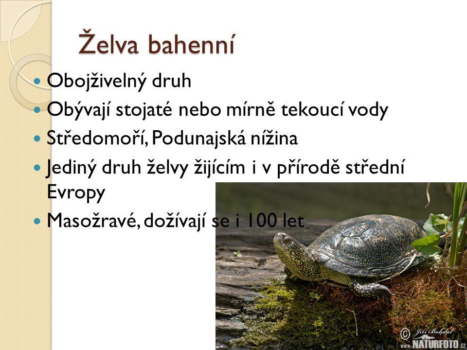 Želva bahenní  Obojživelný druh  Obývají stojaté nebo mírně tekoucí vody  Středomoří, Podunajská nížina  Jediný druh želvy žijícím i v přírodě stř