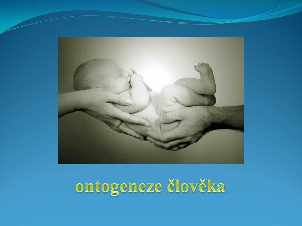 Ontogeneze člověka  vývoj člověka od početí po smrt  fáze:  prenatální vývoj a porod  novorozenecdo 4.