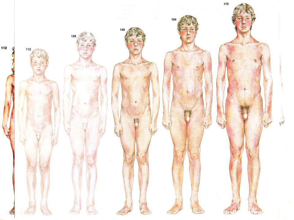  mladší školní věk 6 – 12 let  starší školní věk 12 – 15 let  růst kostí – kalcifikace chrupavek  od 6.
