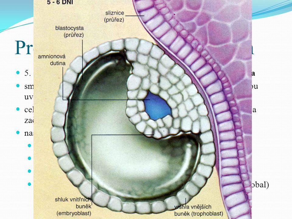  z chorionu začnou prorůstat klky do sliznice dělohy  placenta spojena s embryem pupeční šňůrou (drží embryo ve stěně dělohy, vyživuje je a odvádí metabolity)   asi 10.