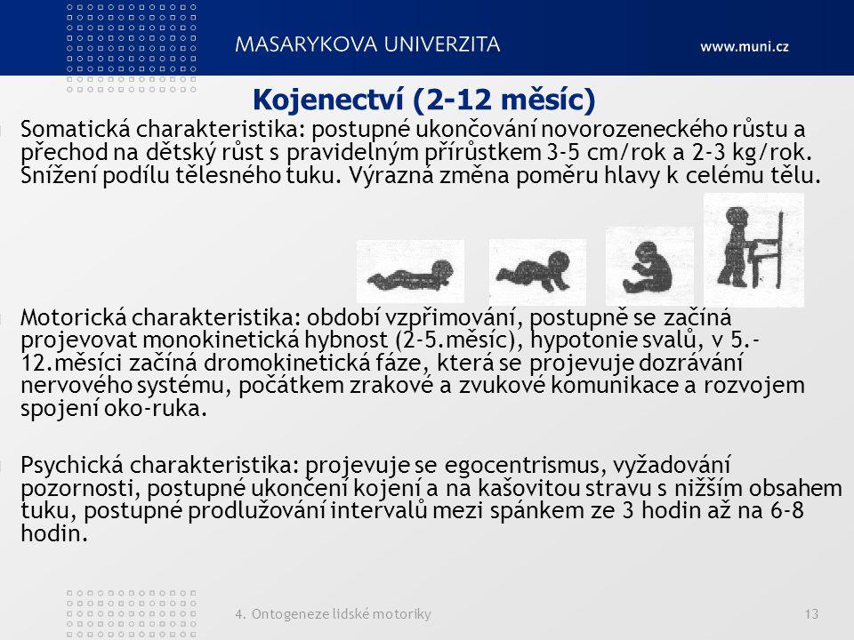 4. Ontogeneze lidské motoriky13 Kojenectví (2-12 měsíc) Somatická charakteristika: postupné ukončování novorozeneckého růstu a přechod na dětský růst