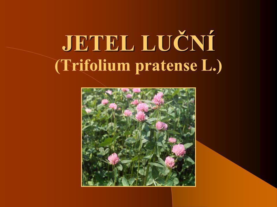 JETEL LUČNÍ (Trifolium pratense L.)
