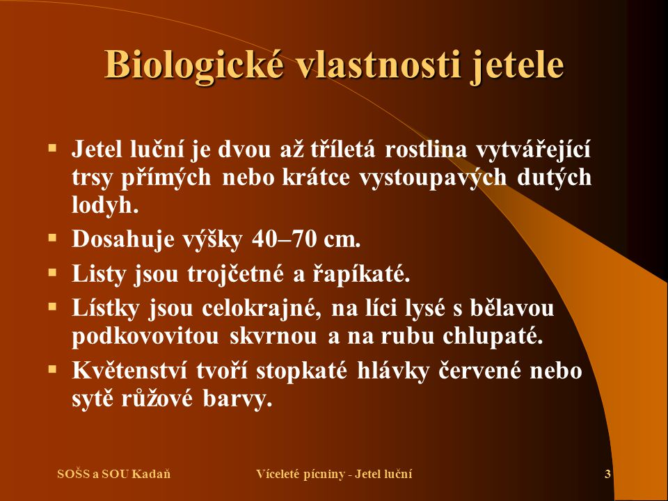 SOŠS a SOU KadaňVíceleté pícniny - Jetel luční3 Biologické vlastnosti jetele  Jetel luční je dvou až tříletá rostlina vytvářející trsy přímých nebo k