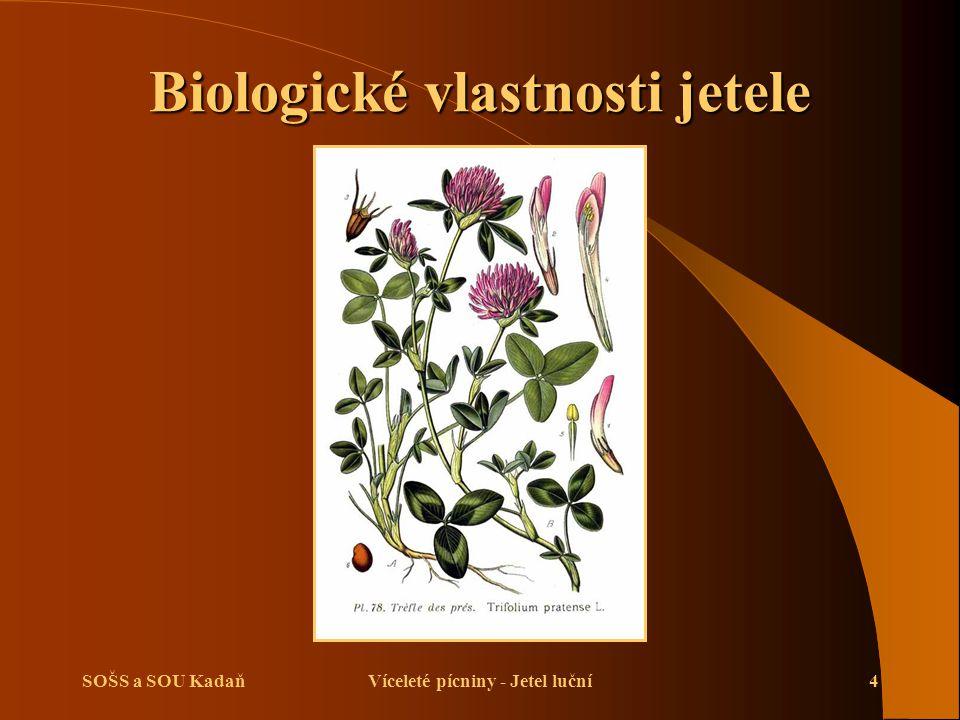 SOŠS a SOU KadaňVíceleté pícniny - Jetel luční5 Biologické vlastnosti jetele  Odrůdy jetele se rozdělují do dvou skupin:  Jetel luční dvojsečný – pěstuje se na 1 užitkový rok.