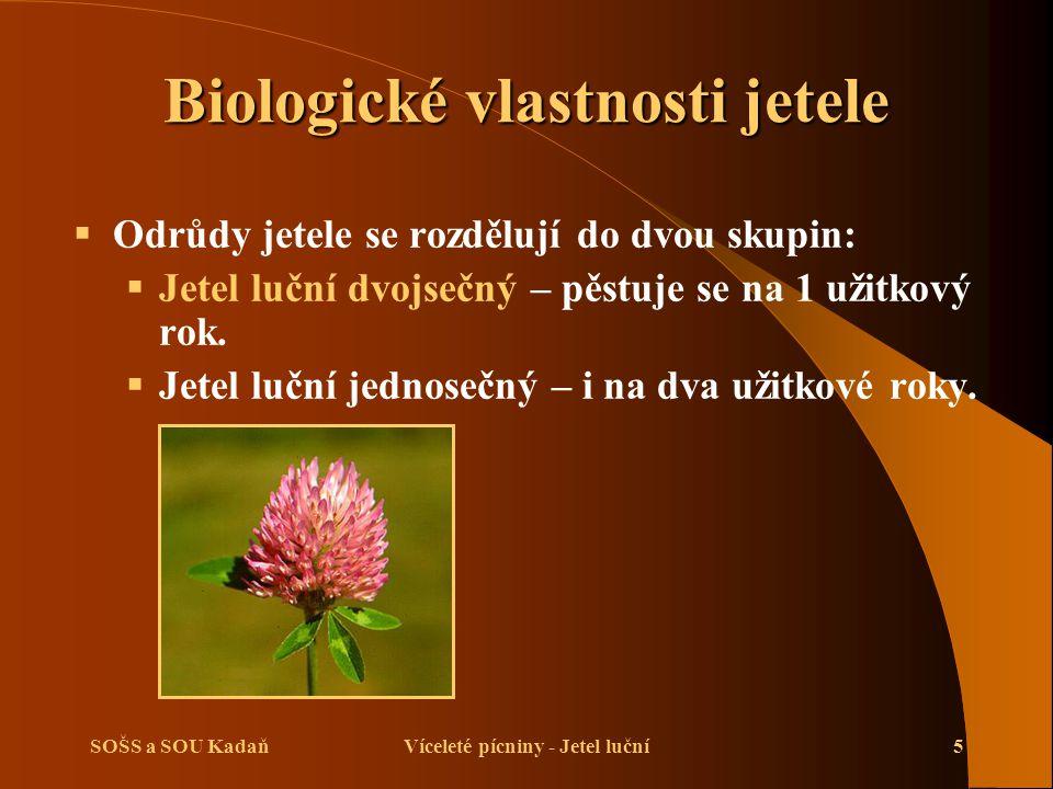 SOŠS a SOU KadaňVíceleté pícniny - Jetel luční5 Biologické vlastnosti jetele  Odrůdy jetele se rozdělují do dvou skupin:  Jetel luční dvojsečný – pě