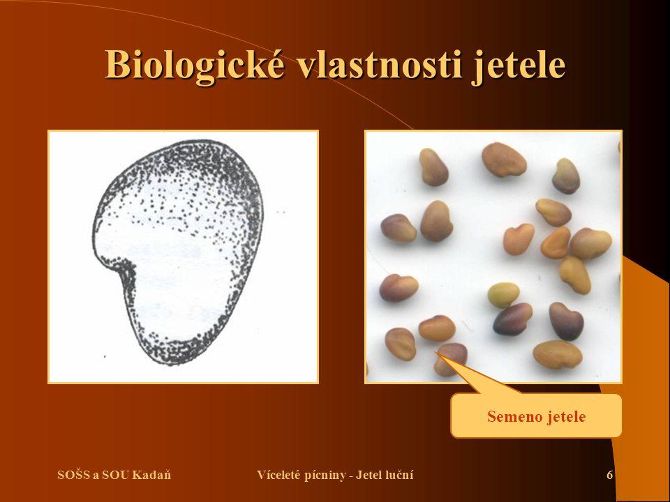 SOŠS a SOU KadaňVíceleté pícniny - Jetel luční7 Biologické vlastnosti jetele Květenství - hlávka