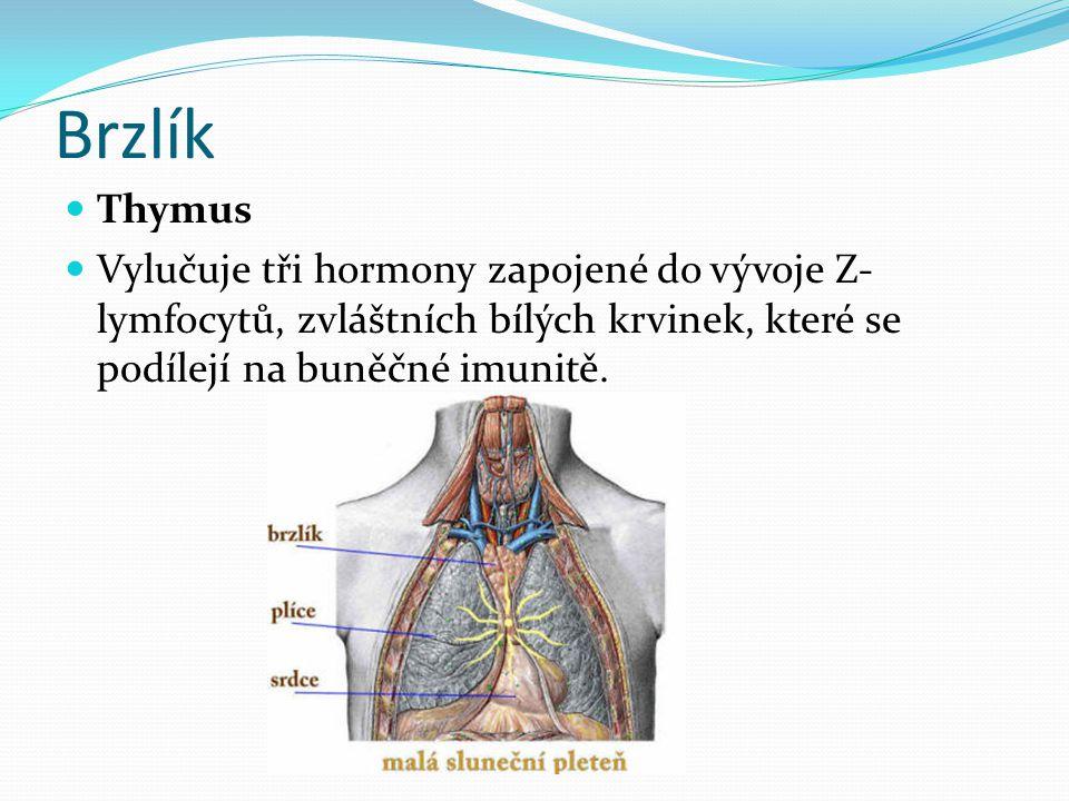 Brzlík  Thymus  Vylučuje tři hormony zapojené do vývoje Z- lymfocytů, zvláštních bílých krvinek, které se podílejí na buněčné imunitě.