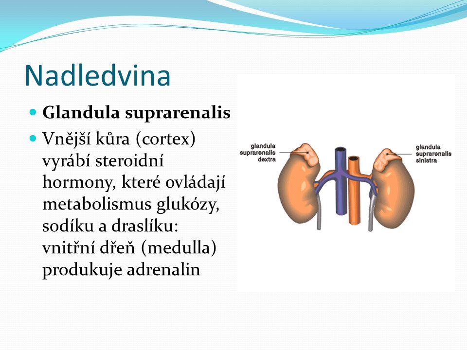 Nadledvina  Glandula suprarenalis  Vnější kůra (cortex) vyrábí steroidní hormony, které ovládají metabolismus glukózy, sodíku a draslíku: vnitřní dř