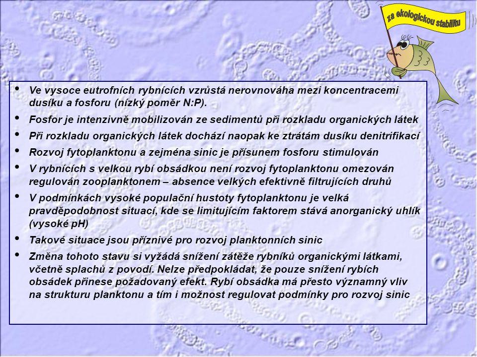 • Ve vysoce eutrofních rybnících vzrůstá nerovnováha mezi koncentracemi dusíku a fosforu (nízký poměr N:P). • Fosfor je intenzivně mobilizován ze sedi