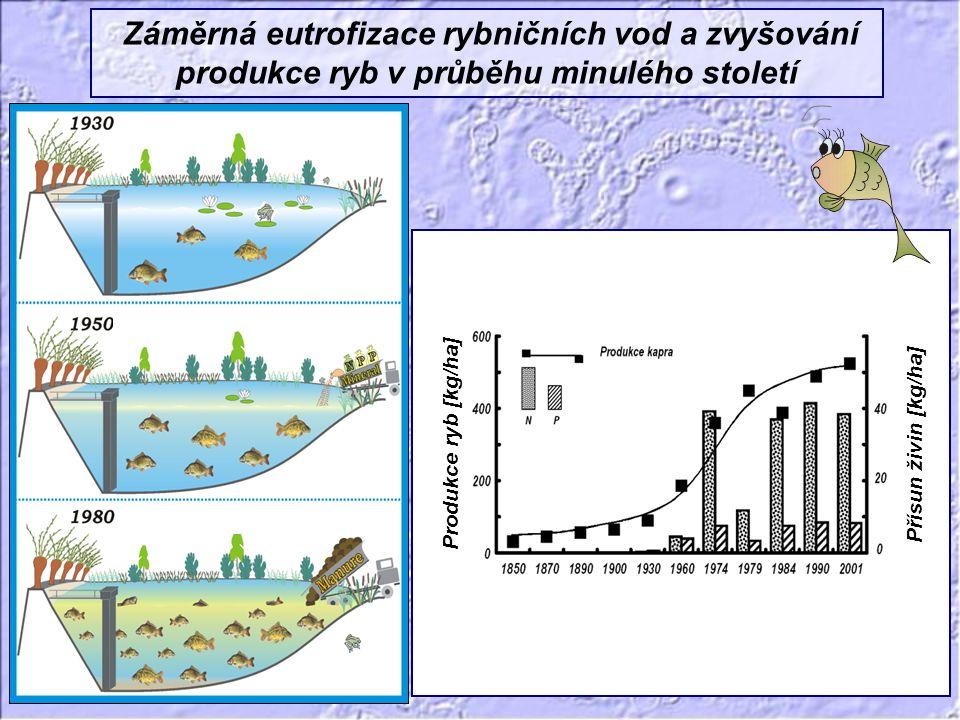 Záměrná eutrofizace rybničních vod a zvyšování produkce ryb v průběhu minulého století Produkce ryb [kg/ha] Přísun živin [kg/ha]
