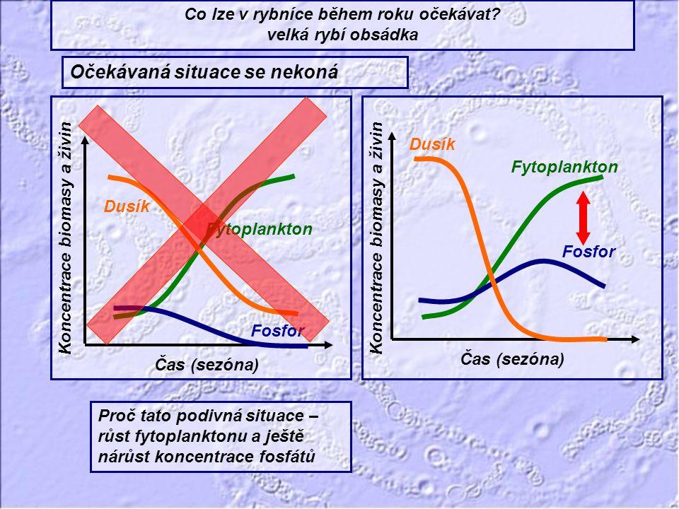Fytoplankton Dusík Fosfor Čas (sezóna) Koncentrace biomasy a živin Fytoplankton Dusík Fosfor Čas (sezóna) Koncentrace biomasy a živin Co lze v rybníce