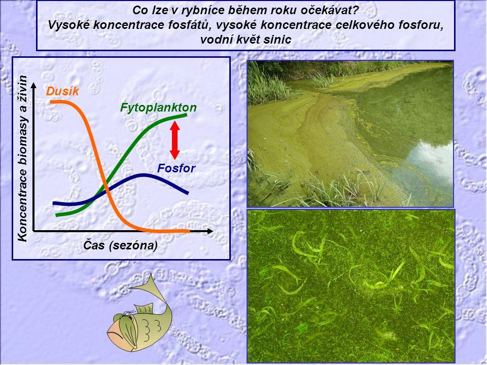 Co lze v rybníce během roku očekávat? Vysoké koncentrace fosfátů, vysoké koncentrace celkového fosforu, vodní květ sinic Fytoplankton Dusík Fosfor Čas