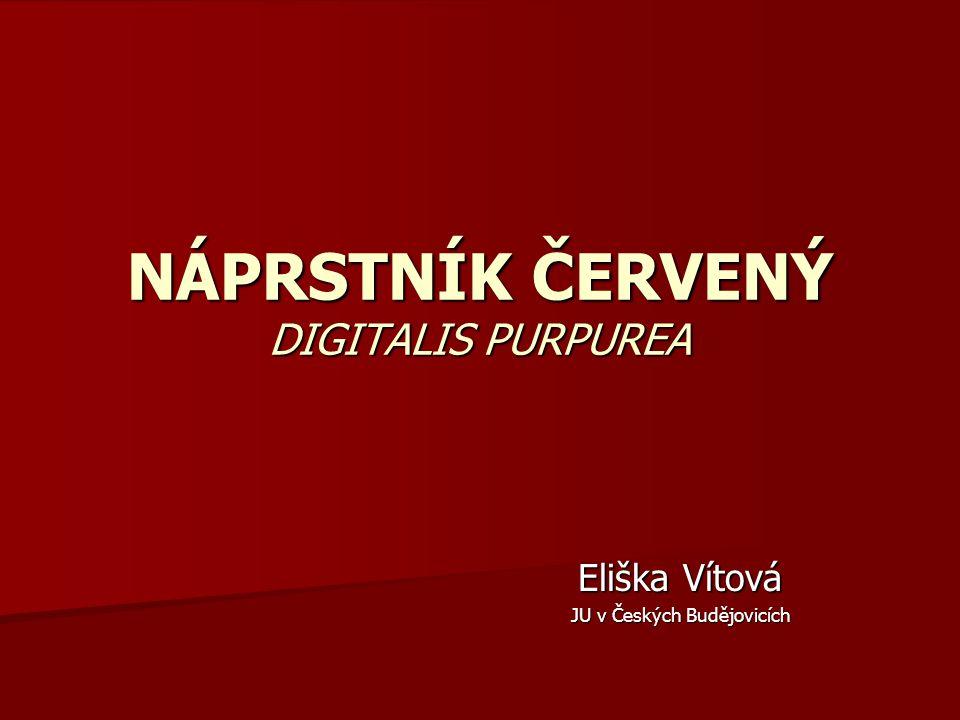 NÁPRSTNÍK ČERVENÝ DIGITALIS PURPUREA Eliška Vítová JU v Českých Budějovicích