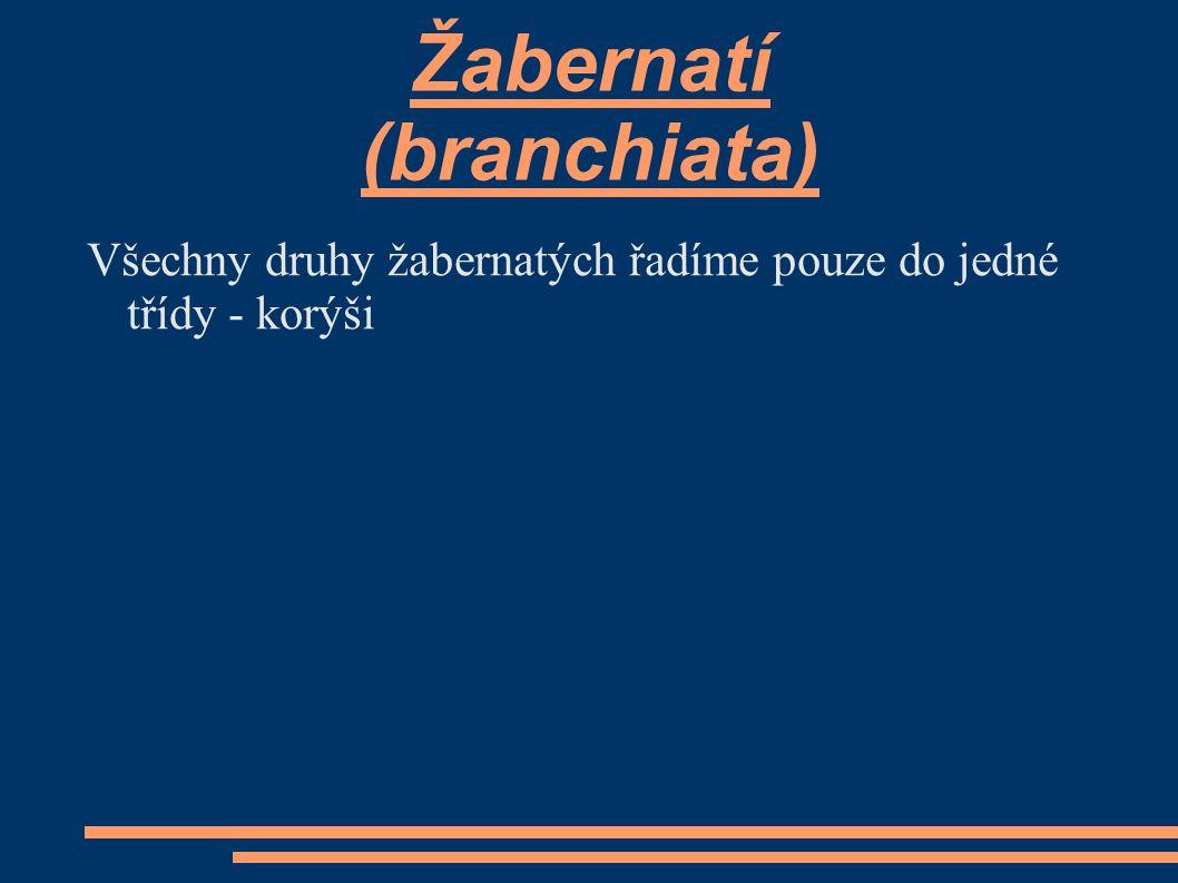 Žabernatí (branchiata) Všechny druhy žabernatých řadíme pouze do jedné třídy - korýši