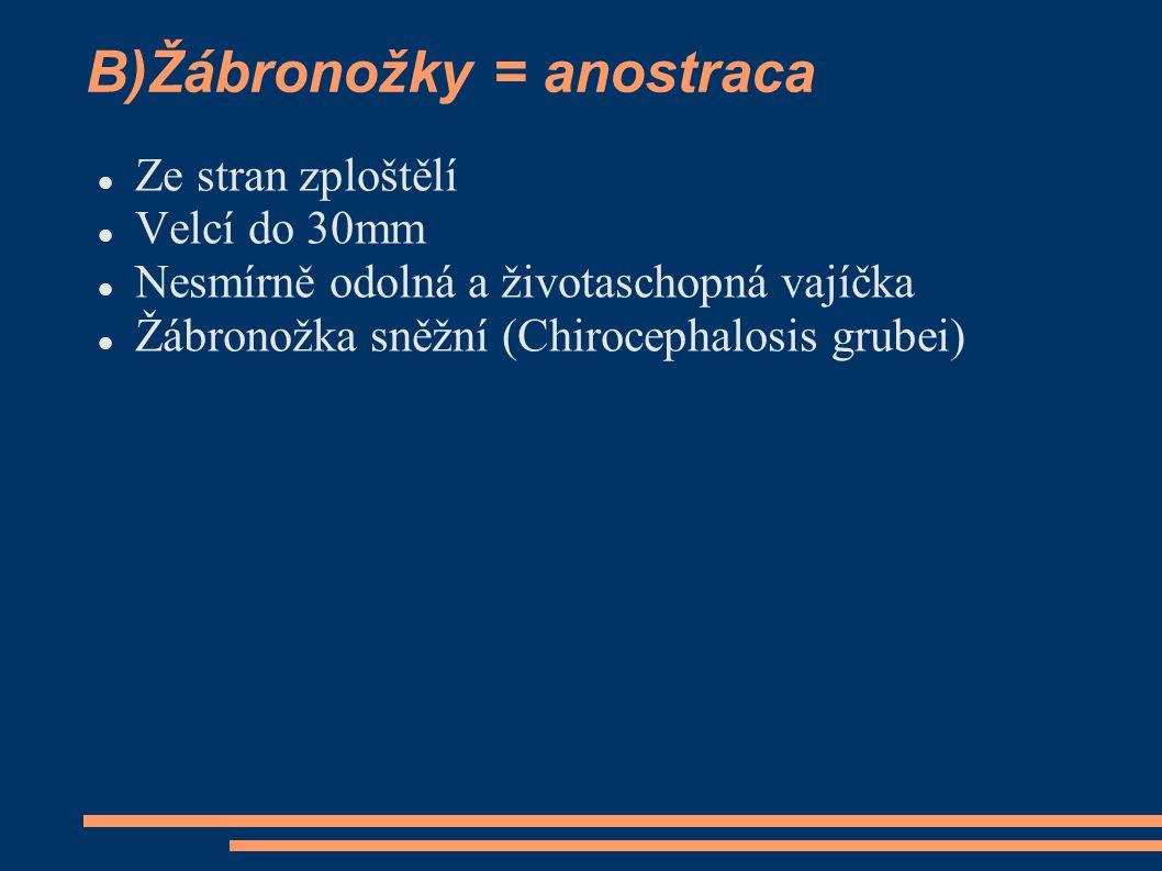 B)Žábronožky = anostraca  Ze stran zploštělí  Velcí do 30mm  Nesmírně odolná a životaschopná vajíčka  Žábronožka sněžní (Chirocephalosis grubei)