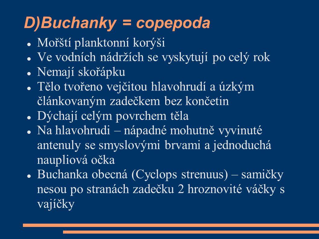 D)Buchanky = copepoda  Mořští planktonní korýši  Ve vodních nádržích se vyskytují po celý rok  Nemají skořápku  Tělo tvořeno vejčitou hlavohrudí a