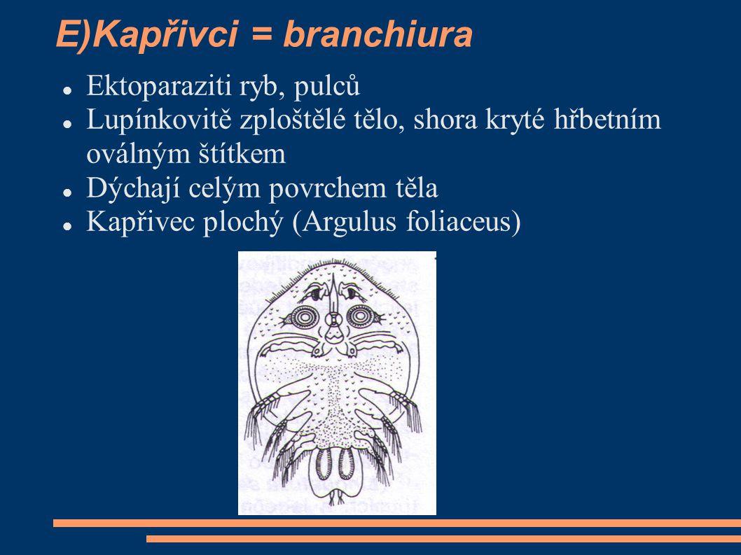 E)Kapřivci = branchiura  Ektoparaziti ryb, pulců  Lupínkovitě zploštělé tělo, shora kryté hřbetním oválným štítkem  Dýchají celým povrchem těla  K