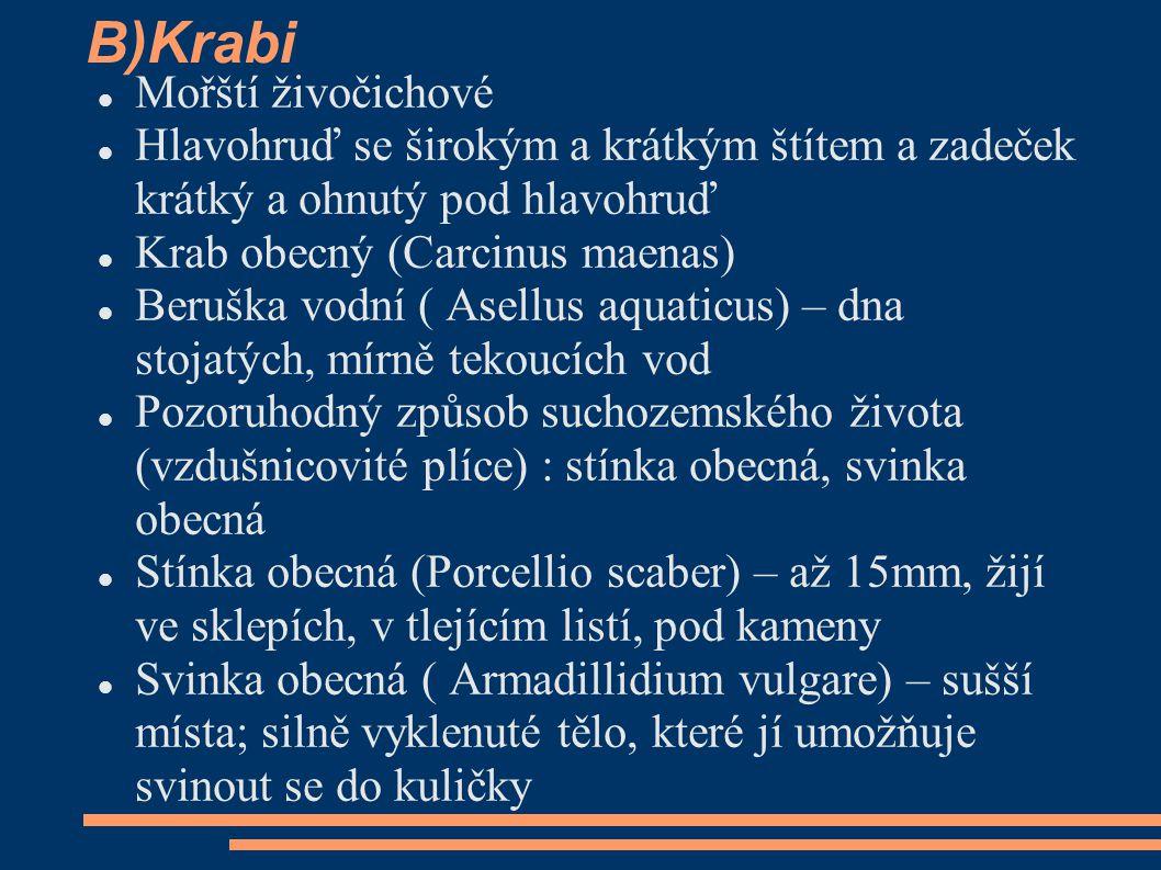 B)Krabi  Mořští živočichové  Hlavohruď se širokým a krátkým štítem a zadeček krátký a ohnutý pod hlavohruď  Krab obecný (Carcinus maenas)  Beruška