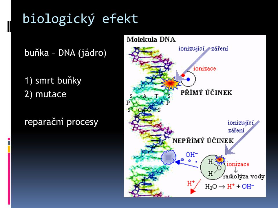 biologický efekt buňka – DNA (jádro) 1) smrt buňky 2) mutace reparační procesy