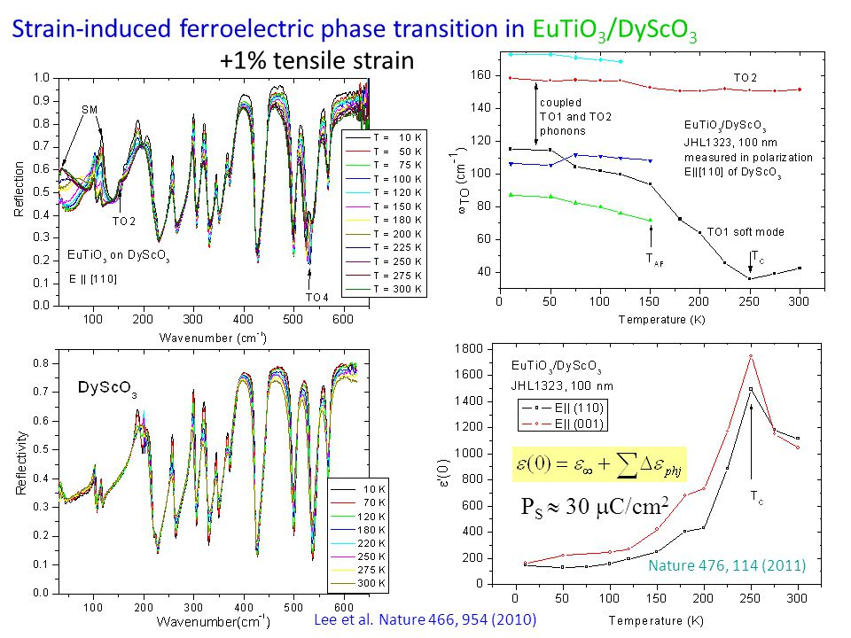 Strain-induced ferroelectric phase transition in EuTiO 3 /DyScO 3 +1% tensile strain Lee et al.