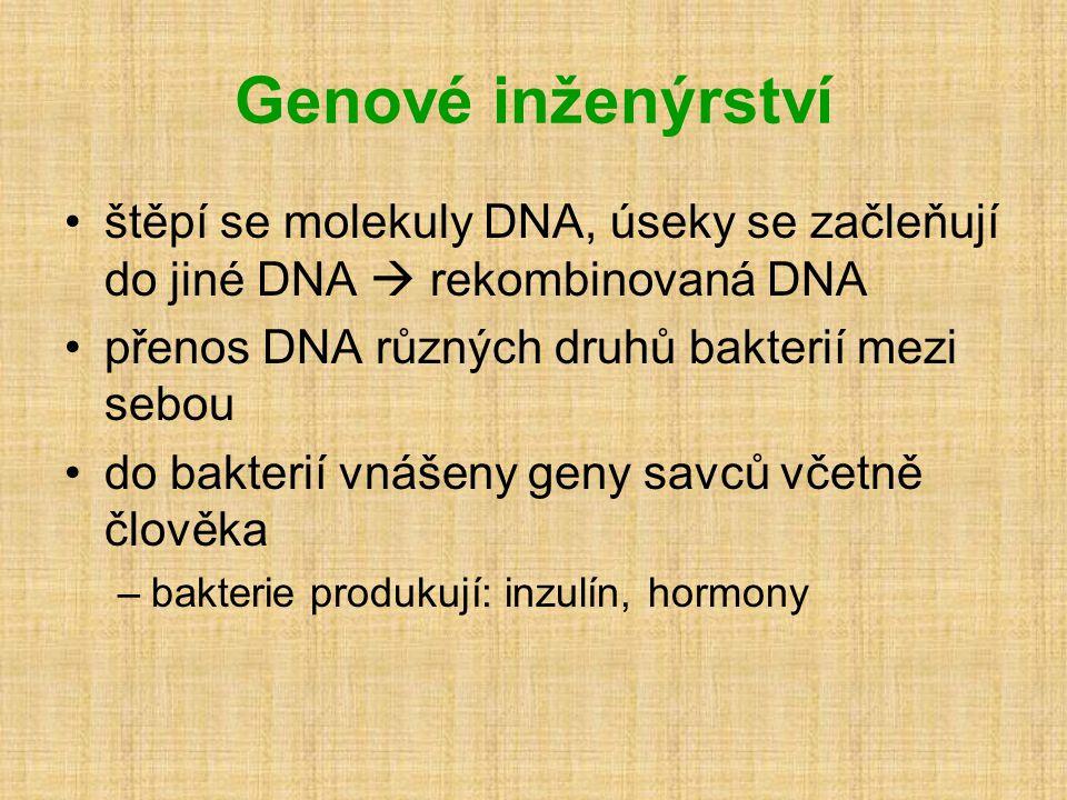 Genové inženýrství •štěpí se molekuly DNA, úseky se začleňují do jiné DNA  rekombinovaná DNA •přenos DNA různých druhů bakterií mezi sebou •do bakterií vnášeny geny savců včetně člověka –bakterie produkují: inzulín, hormony