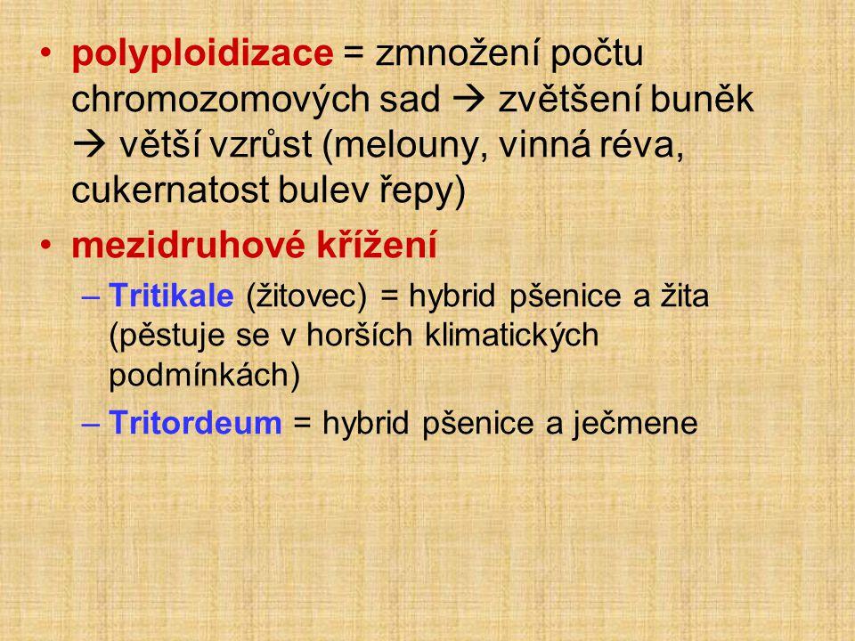 •polyploidizace = zmnožení počtu chromozomových sad  zvětšení buněk  větší vzrůst (melouny, vinná réva, cukernatost bulev řepy) •mezidruhové křížení