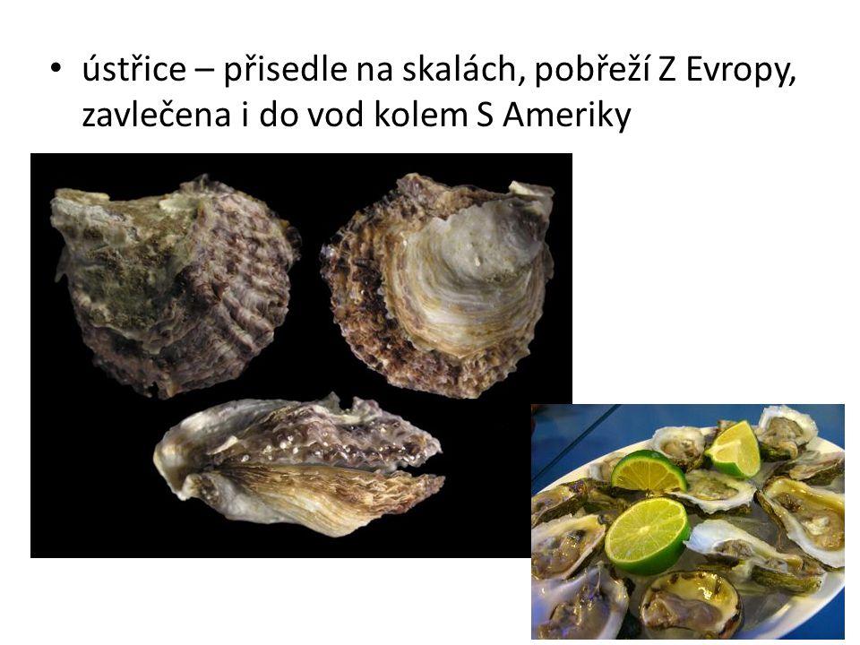 • ústřice – přisedle na skalách, pobřeží Z Evropy, zavlečena i do vod kolem S Ameriky