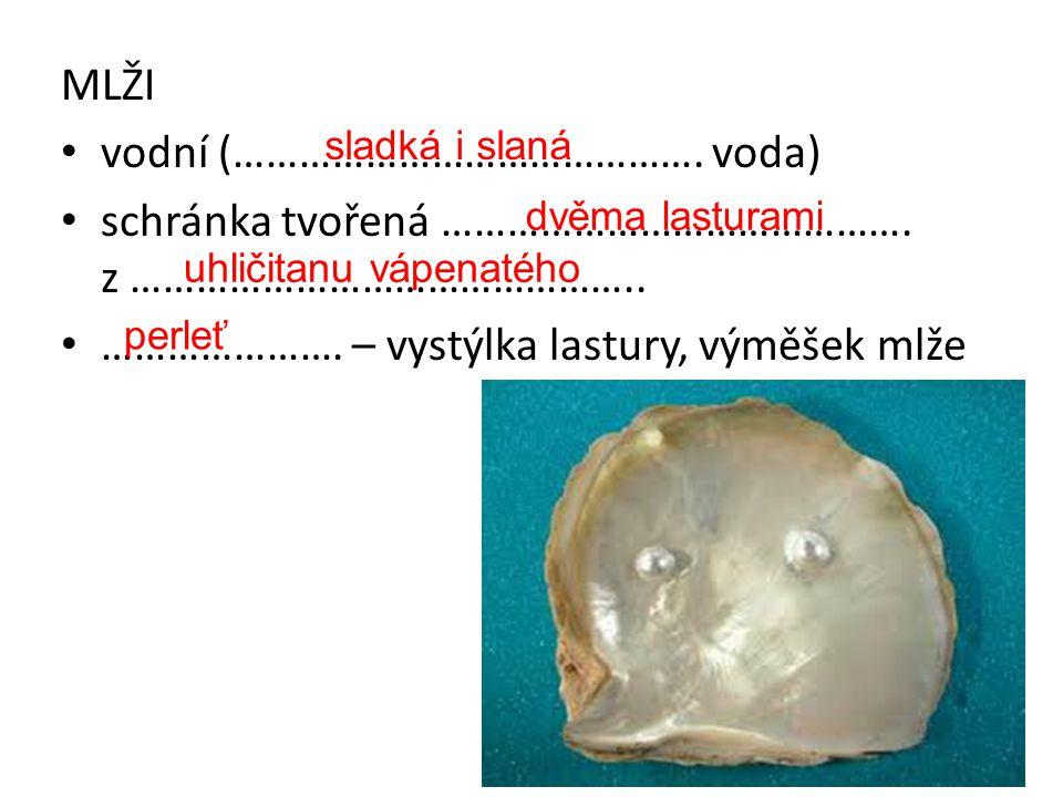 • vodní (……………………………………. voda) • schránka tvořená ……………………………………. z ……………………………………….. • …………………. – vystýlka lastury, výměšek mlže sladká i slaná dvěma