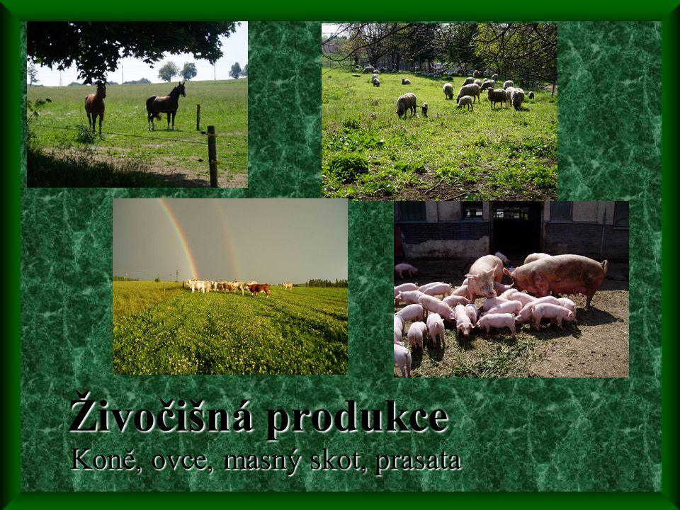 Živočišná produkce Koně, ovce, masný skot, prasata Živočišná produkce Koně, ovce, masný skot, prasata