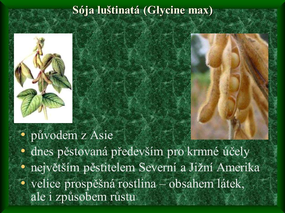 Sója luštinatá (Glycine max) • původem z Asie • dnes pěstovaná především pro krmné účely • největším pěstitelem Severní a Jižní Amerika • velice prospěšná rostlina – obsahem látek, ale i způsobem růstu