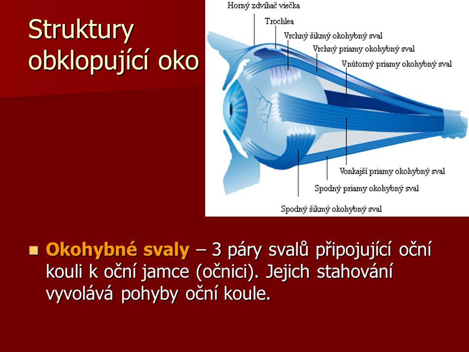 Slzné žlázy  2 exokrinní žlázy, po jedné v horní části každé očnice  Vylučují vodnatou tekutinu (soli, protibakteriální enzymy) na sliznici horního víčka  Omývá povrch oka, aby zůstalo vlhké a čisté  Odtéká slznými kanálky, které jsou umístěné po dvou ve vnitřním koutku oka a ústí do slzovodu vedoucího do nosní dutiny