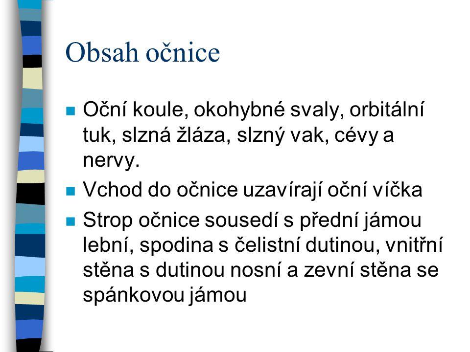 Obsah očnice n Oční koule, okohybné svaly, orbitální tuk, slzná žláza, slzný vak, cévy a nervy. n Vchod do očnice uzavírají oční víčka n Strop očnice