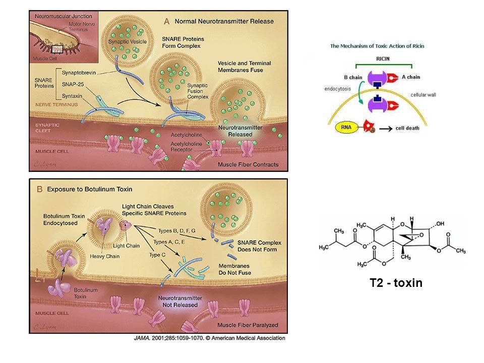 T2 - toxin